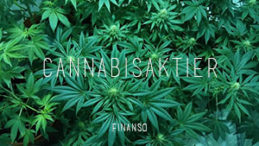 cannabisaktier-marijuanaaktier-weedaktier-sverige